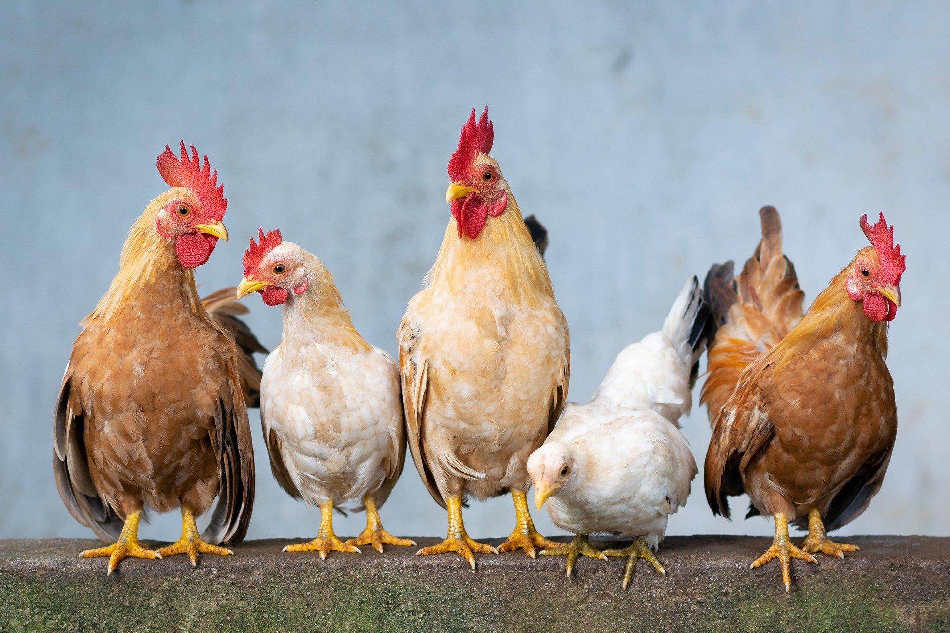 鶏胸肉の加熱時間を短縮する方法